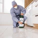 Additional Pest Control Services from Outsource Cleaning